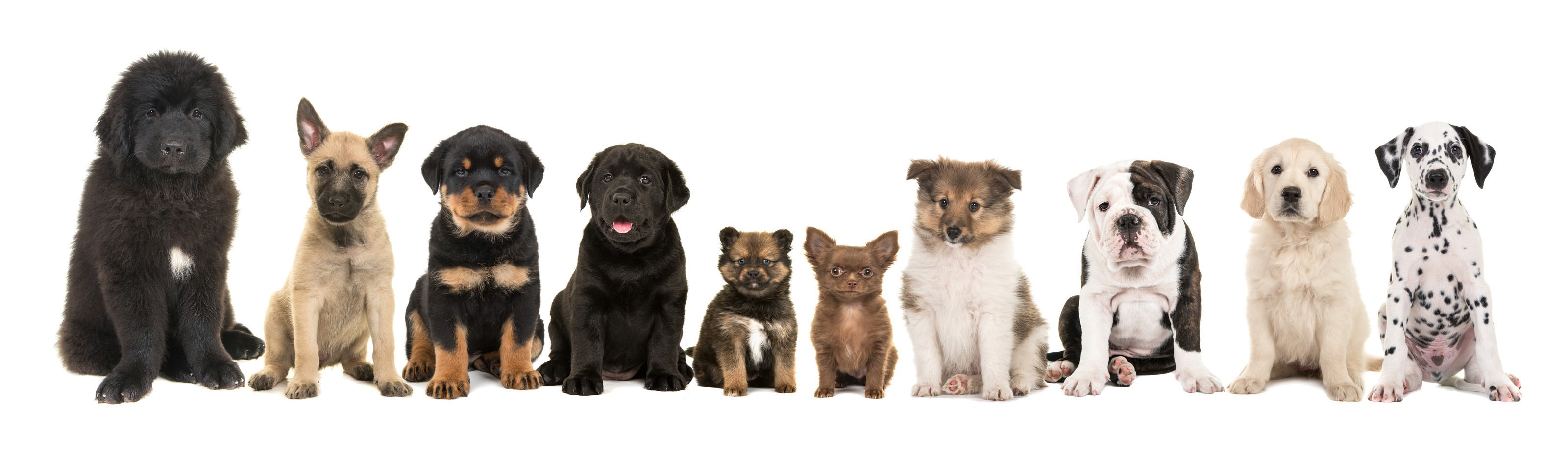 Lineup of different puppies