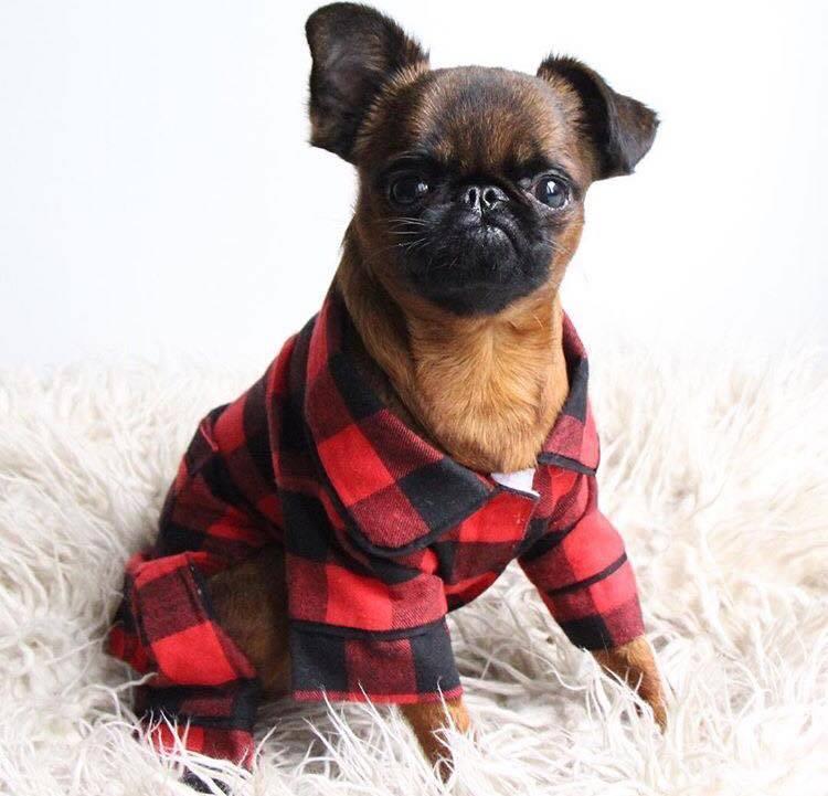 Fabdog Matching Pajamas