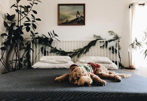 Tuft & Needle Mint mattress review
