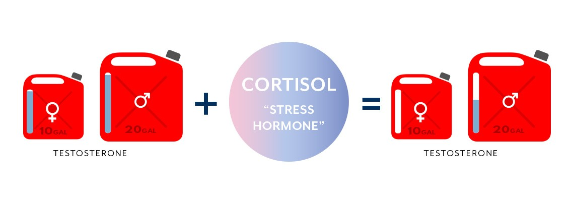 A graphic that illustrates the relationship between cortisol and testosterone