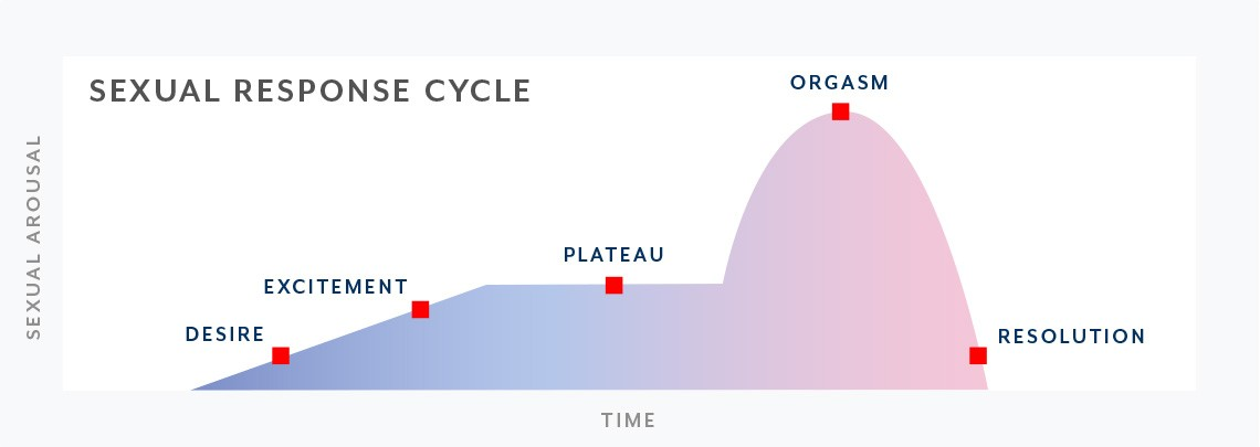 A graphic of the sexual response cycle.