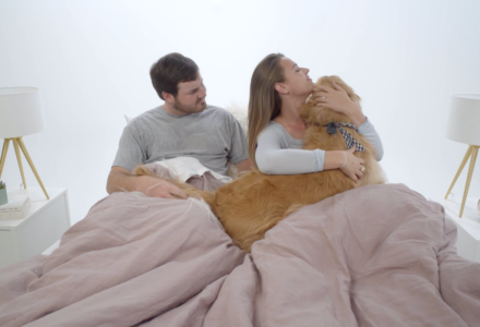 Pets and sleep: couple fighting over a dog in bed