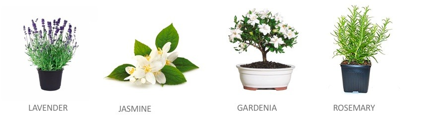 Stress relieving plants that help you sleep
