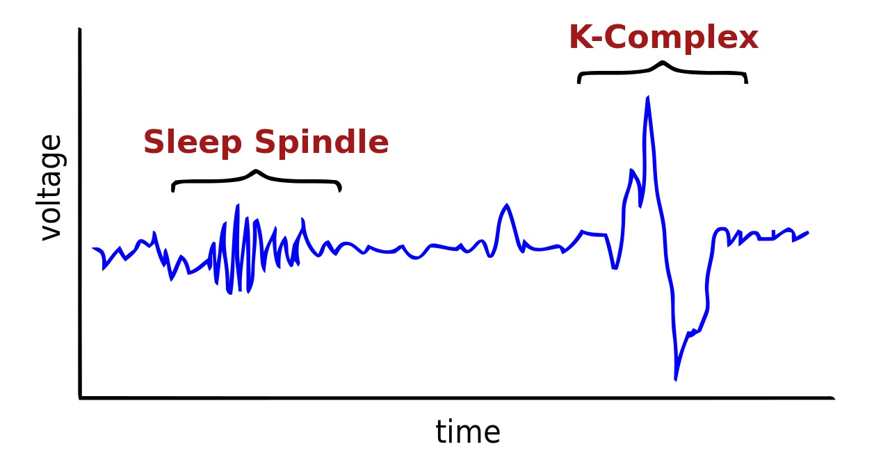 Sleep spindle and K-complex (from Wikipedia)