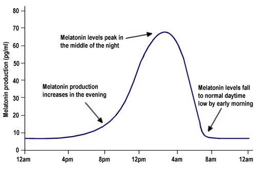 Daily melatonin production