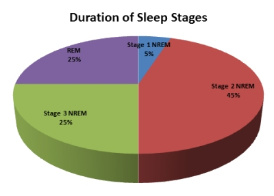 Sleep - Types and Stages of Sleep - Sleep Cycles