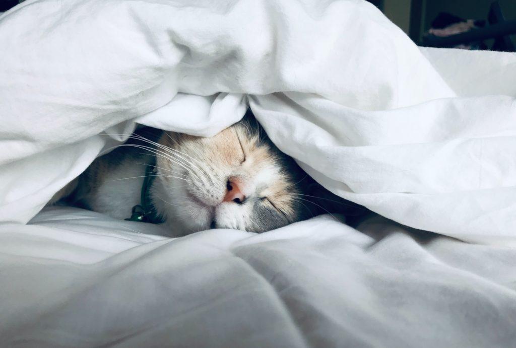 cat in bed