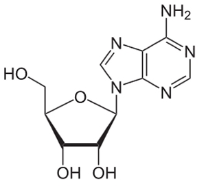 Adenosine, the best-known of the sleep-regulating substances involved in the homesostatic sleep drive (image from Wikipedia)