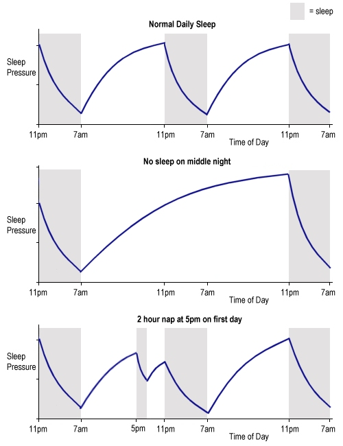 Homesostatic sleep pressure (image by Luke Mastin)