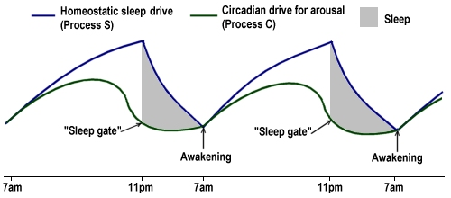 Image result for S and C curve sleep