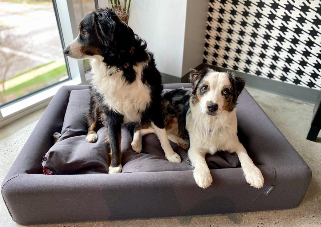 tuft needle dog bed milo cosmo scaled